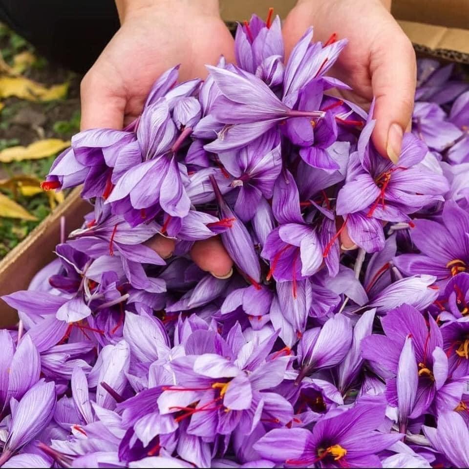 Hoa nghệ tây - nguyên liệu làm Saffron