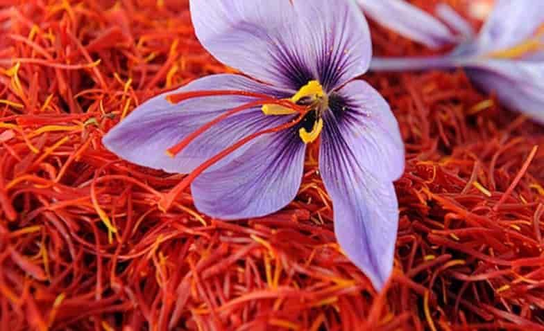 công dụng tuyệt vời của saffron
