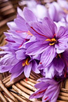hoa saffron tu nhien
