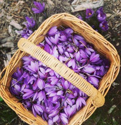 gio hoa saffron